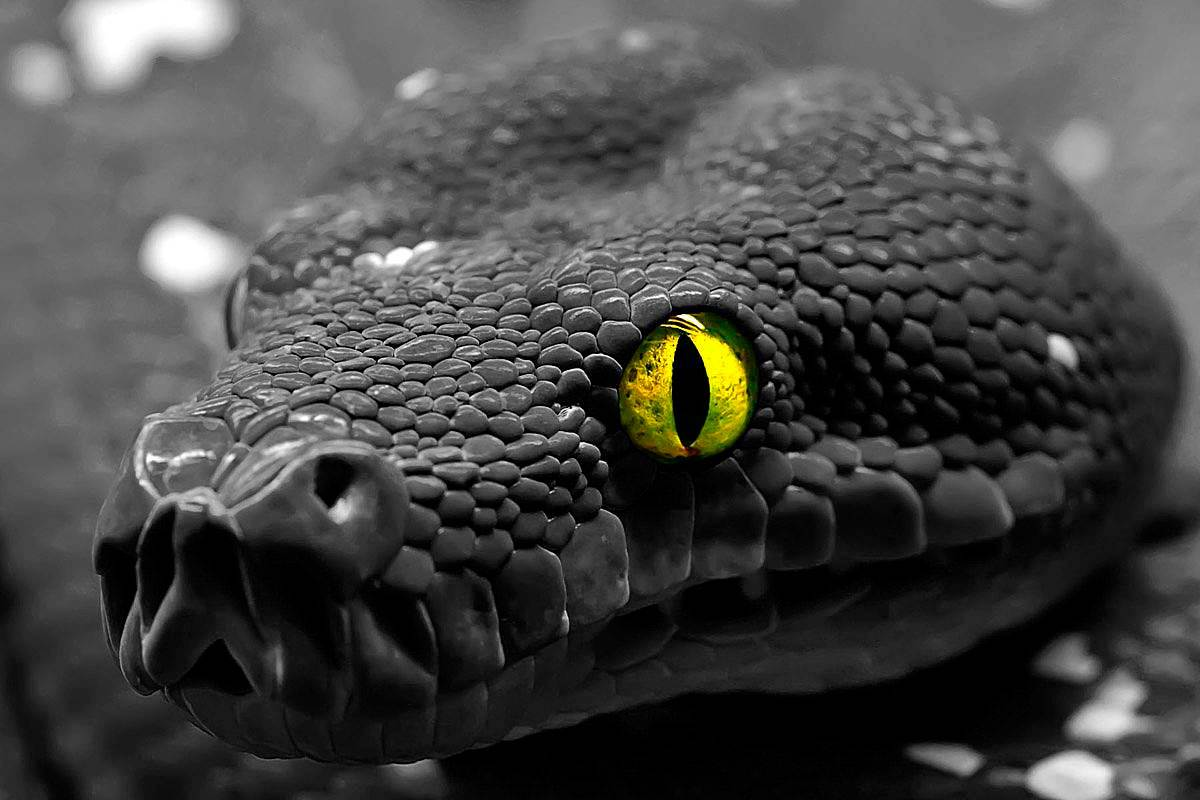 Прогноз на 2013 год черной водяной Змеи