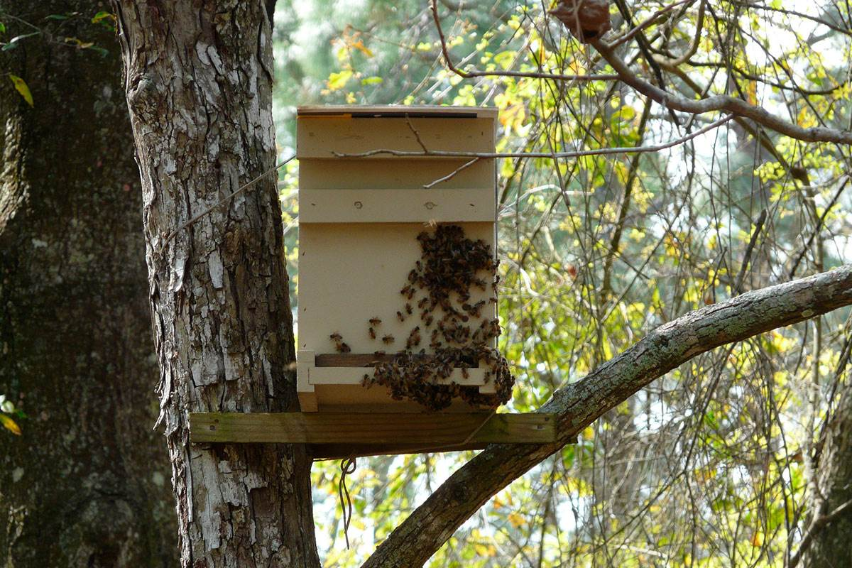Заговор для пчел