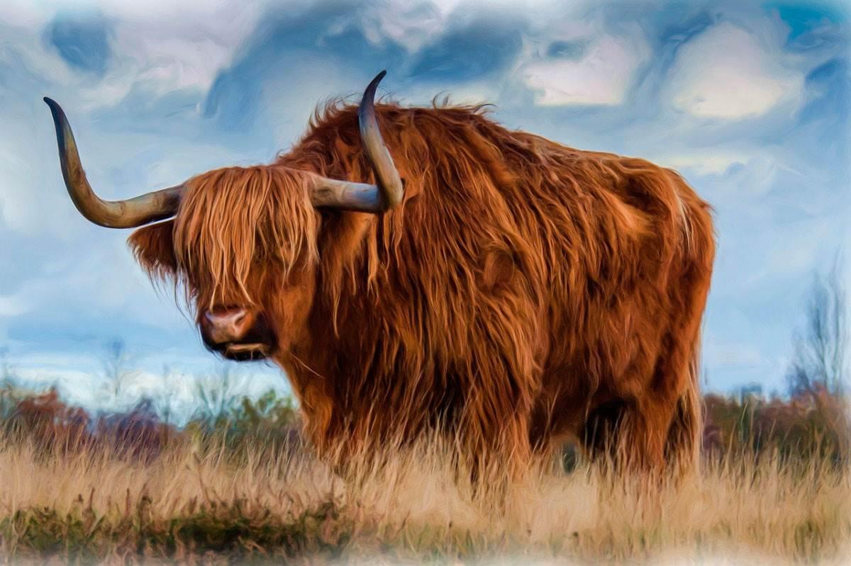 Год быка